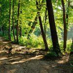 Titelbild Waldweg - Der Weg ist das Ziel